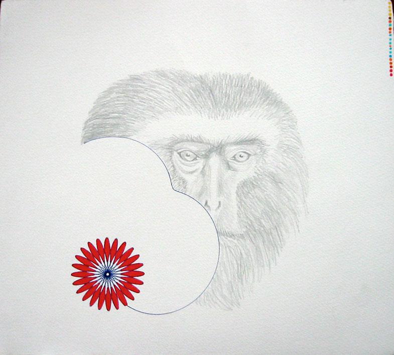 peeking-ape